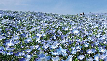 Ibaraki - Nikko - Núi Phú Sỹ - Tokyo (6 ngày)...